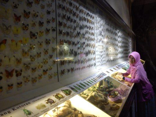 My Zawjaty, sedang menikmati pemandangan fosil kupu-kupu
